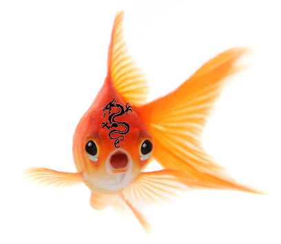 goldfish-with-dragon-tattoo
