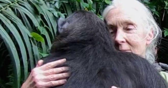 jane-goodall-hugs-gorilla