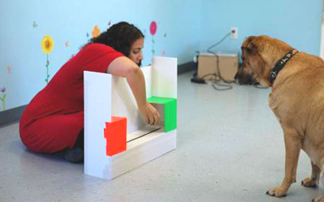 Canine-Cognition-Center3