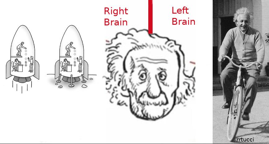 einstein-r-l-brain